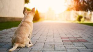 animais em condomínio legislação